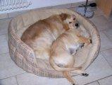 image sheela_yuma_29-jpg