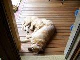 image sheela_yuma_30-jpg