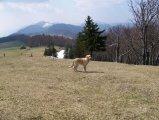 image weissenstein_april_2007_49-jpg