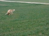 Yuma Januar 2008