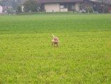 image yuma_085-jpg